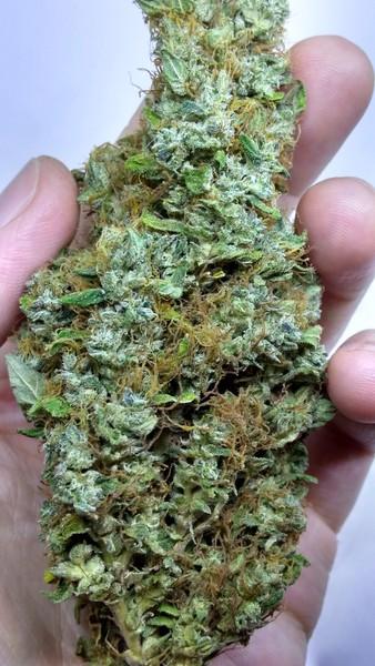 Buy Viper Sativa Marijuana Strain UK